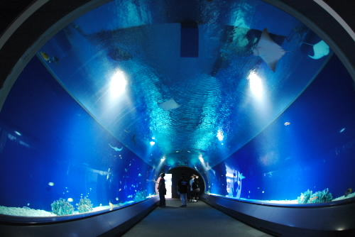 photo of Osaka Aquarium (Kaiyukan)