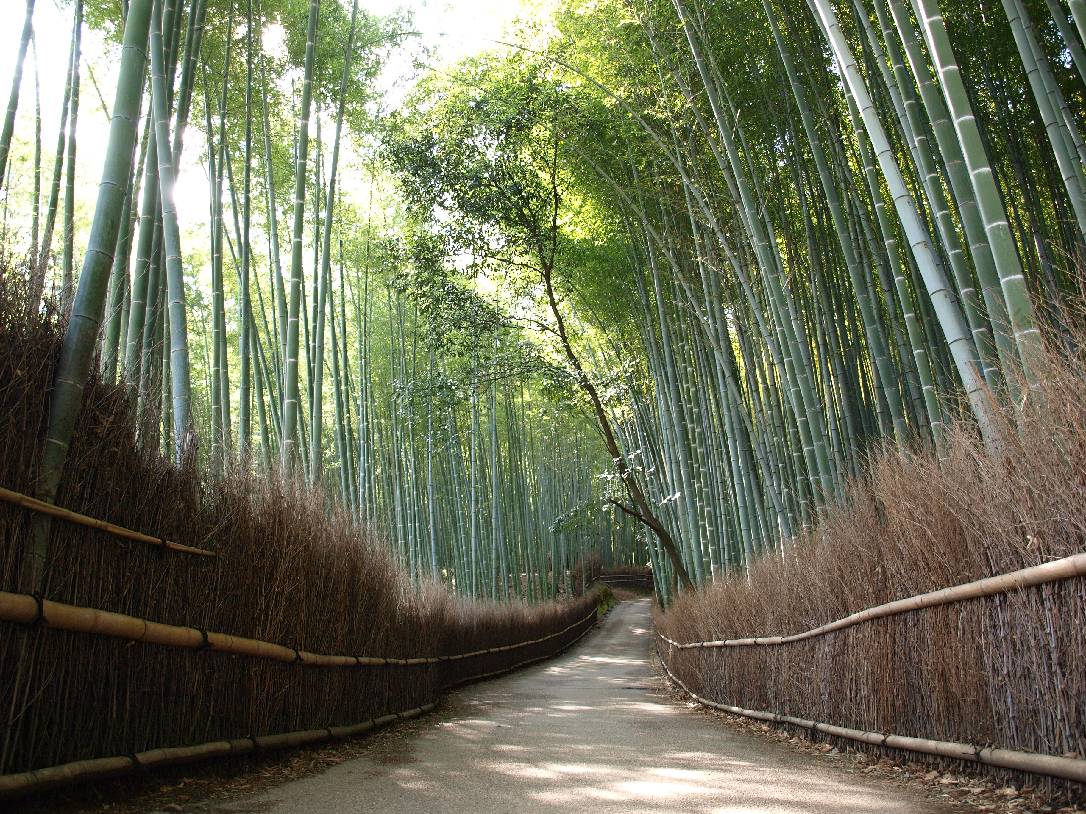 photo of Bamboo Forest