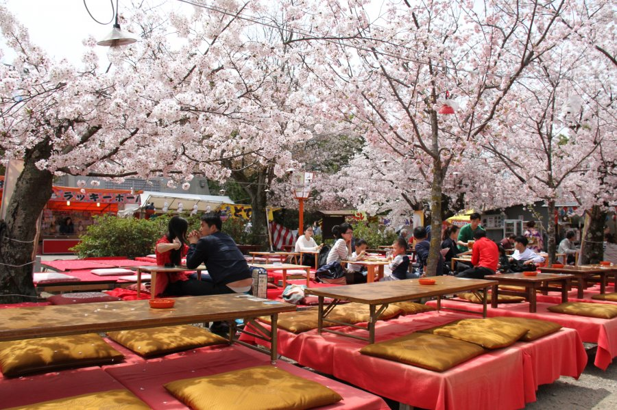 top photo when to travel to japan Spring