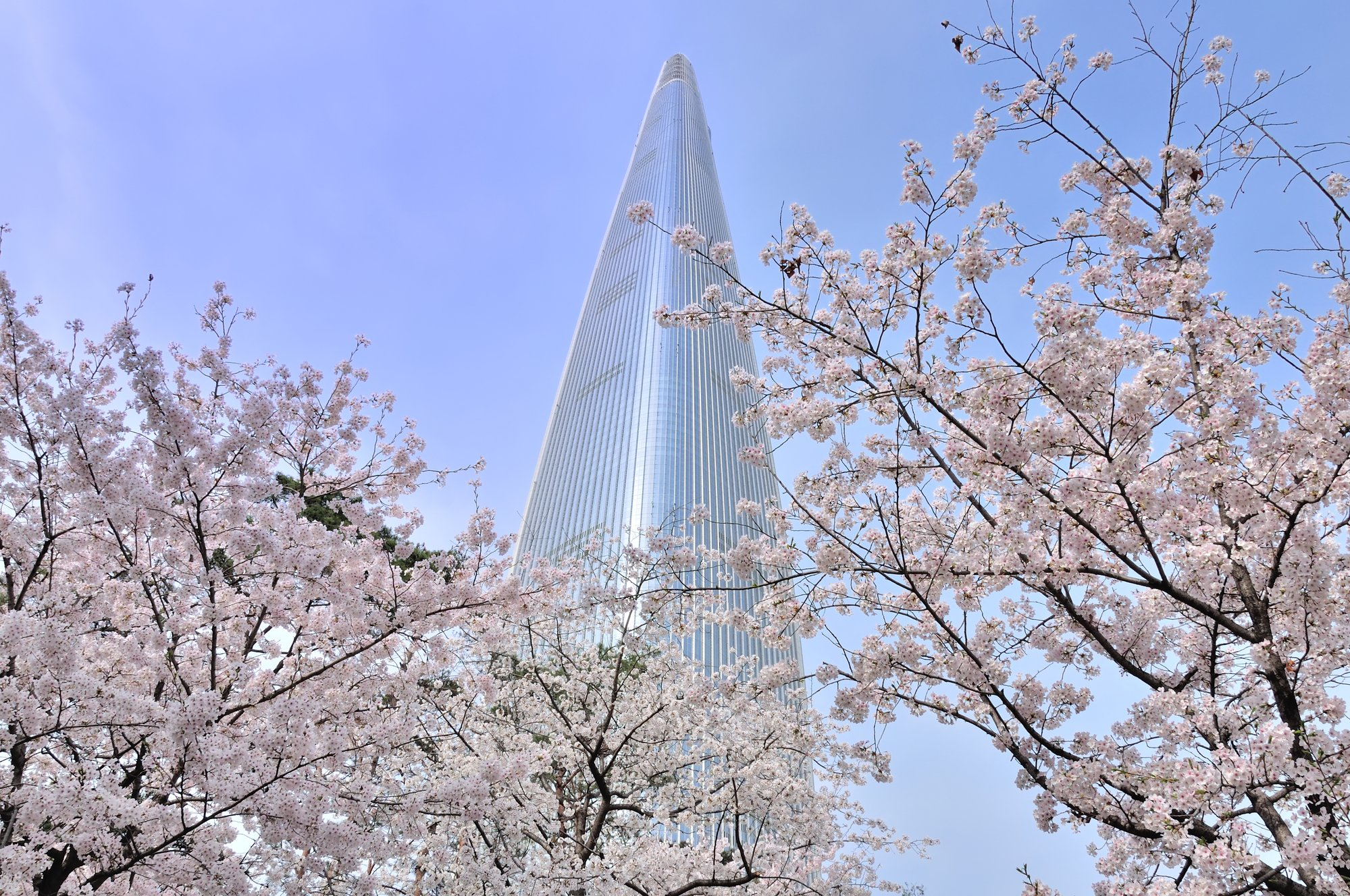 Highlights Of Korea And Japan Cherry Blossom Tour 2022 2023 All Japan Tours