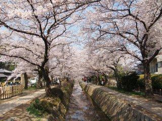 Japan Art & Garden Tour: Cherry Blossoms 2021 - 3/24