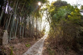 Nakasendo Trail Walking & Hiking Tour: Autumn Leaves 