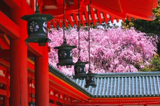 Luxury Japan Cherry Blossom Tour 2021 - 4/1