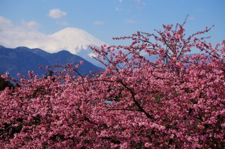 The Golden Triangle of Japan: Kawazu 