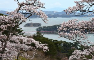 Charms of Northern Japan (Reverse): Cherry 