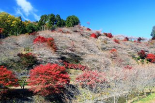 The Golden Triangle of Japan: Autumn Leaves & Cherry 