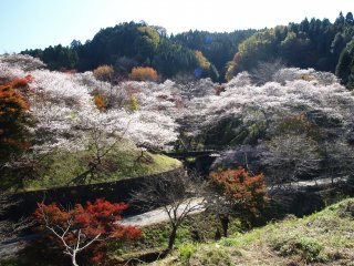 Japan In Depth with Japanese Alps: Autumn Leaves Tour 
