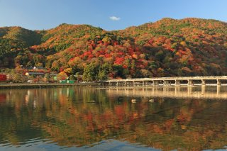 The Golden Route Japan (Reverse): Autumn Leaves 