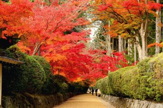 Best of Japan with Japanese Alps & Koyasan: Autumn 