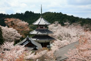 Best of Japan with Japanese Alps & Koyasan: Cherry 