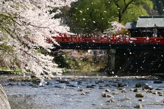 Best of Japan with Japanese Alps (Reverse): Cherry 