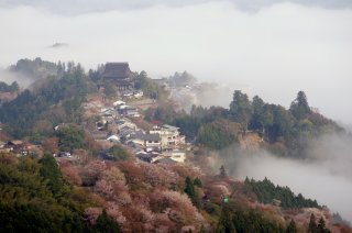 Majestic Japan: Cherry Blossom Tour 2022 - 3/28