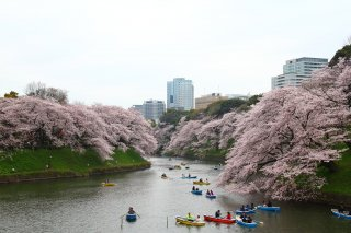 Discover Japan Cherry Blossom Tour 2022 