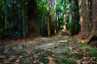 Kumano Kodo Walking & Hiking Tour: Autumn Leaves 