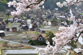 The Golden Triangle of Japan: Cherry Blossom Tour 2021 