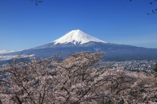 Signature: Classic Japan - Cherry Blossom Tour 2020 - 