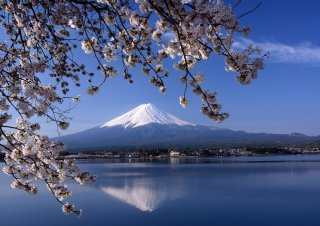 Signature: Classic Japan Cherry Blossom Tour 2021 - 3/29