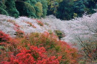 Best of Japan with Japanese Alps: Autumn Leaves & Cherry 