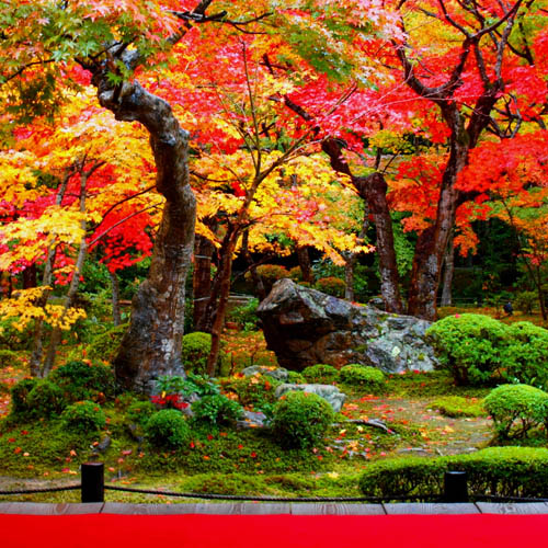 photo of Japanese gardens one