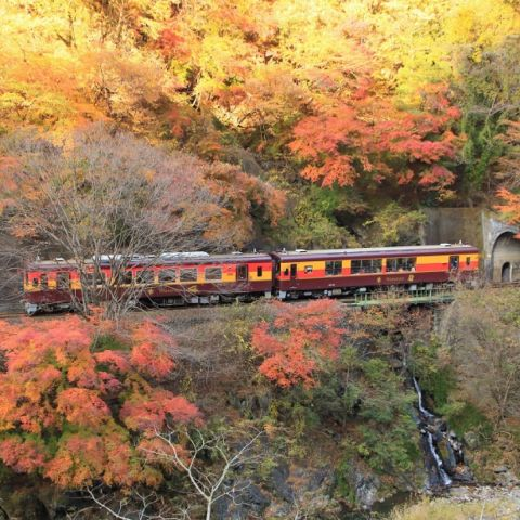 How to Spend Autumn in Kyoto