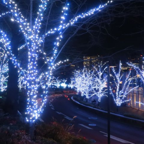 Recommended Spots for Winter Illuminations in Tokyo