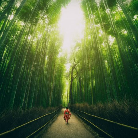 The Arashiyama Sagano Bamboo Grove