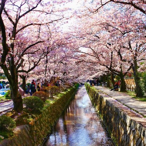 50 of the Best Things to Do in Japan Part 1 (1-25)