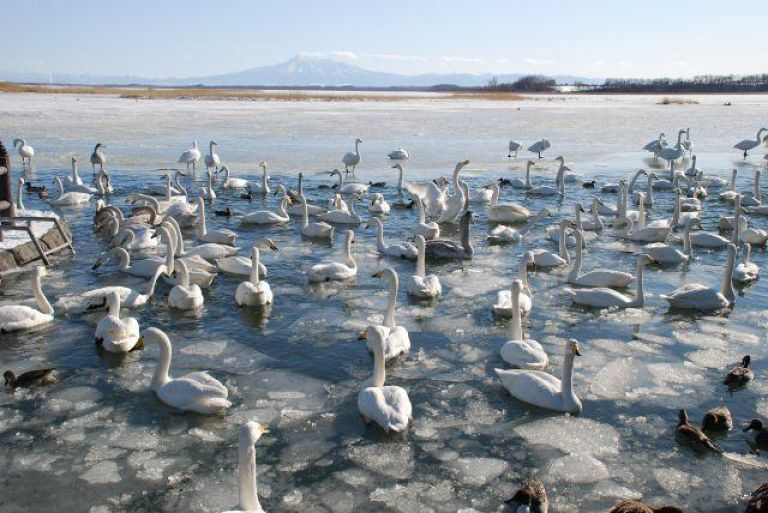 Lake Tofutsu; Things to Do in Hokkaido in Winter; All Japan Tours