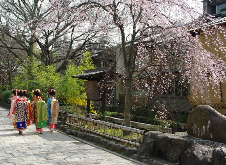 Gion District; Geisha; Maiko Geisha; Kyoto, Japan; All Japan Tours; Kyoto; Where to Go in Kyoto in Three Days; Best Kyoto Itinerary; Cherry Blossoms; Autumn Leaves; Cherry Blossom Season;
