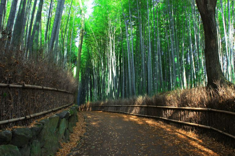 Arashiyama; Bamboo Forest; Kyoto, Japan; All Japan Tours; Kyoto; Where to Go in Kyoto in Three Days; Best Kyoto Itinerary; Cherry Blossoms; Autumn Leaves; Cherry Blossom Season;