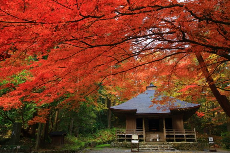 Chusonji Temple Hirazumi Iwate Prefecture All Japan Tours Autumn Leaves