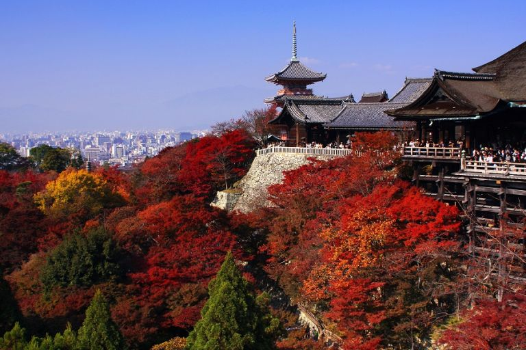 Kiyomizu Temple main hall wooden stage Kyoto in the fall Momoji maple trees