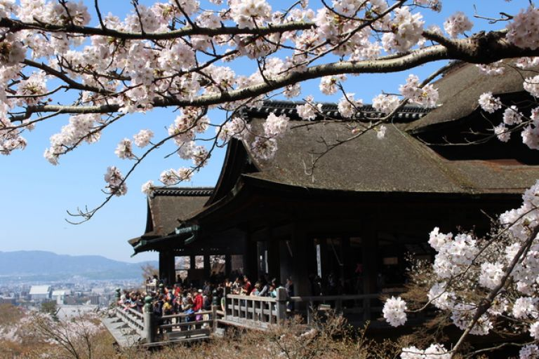 Kiyomizu-dera Temple Kyoto All Japan Tours Cherry Blossoms