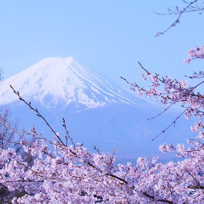 photo of Spring in Japan