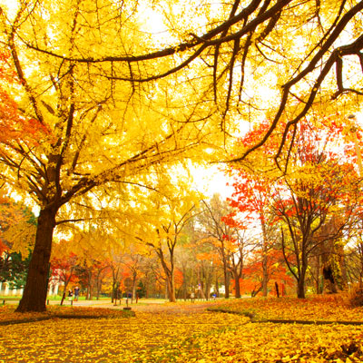 photo of autumn leaves in Japan