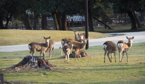 photo of Nara Deer Park