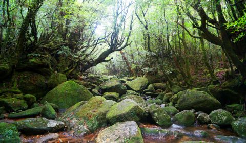 photo of Yakushima Island
