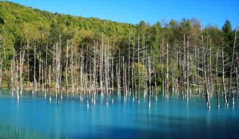photo of Blue Pond